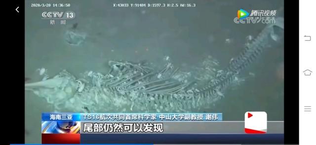 鲸生万物死,鲸死万物生。鲸落应该是海洋最美的陨落吧,死后还能为海洋生物贡献自己,这就是生态链以及大自然的轮回,循环系统。不过,专家说这样的鲸落少之又少,每一次发现都是一段新路程,离探索自然生命奥秘的大陆又进一步。也呼吁我们,不要随意地补杀野生动物,万物有生态系统,缺一不可,保护自然保护环境人人有责。