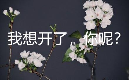 武大樱花都想开了,你还有什么想不开的呢?