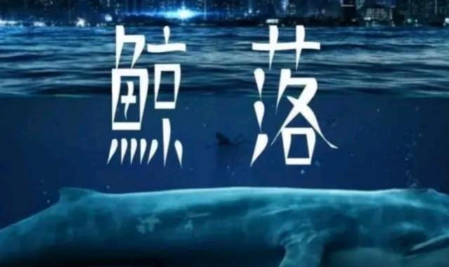 """一鲸落万物生!近日,我国科学家在南海深海海山1600米的地方,首次发现一个约3米长的鲸落。当鲸鱼在海洋中死去, 它的尸体会最终会沉入海底。 生物学家赋予这个过程一个很美的名字——鲸落(Whale Fall)由鲸落形成的海洋生态生命系统,起初进入移动清道夫阶段,由移动的食腐动物,如:盲鳗、睡鲨、深海鱼类等会先吃掉90%的软组织,拆解尸体。大型腐蚀者离去后,接着为机会主义者阶段,轮到多毛类好饿甲壳类小型生物等寄生在残余鲸落身上。此外,还有许多肉眼看不到的微生物也会蚕食残渣。对这些分解者而言就是一场美食盛宴,这顿飨宴依照鲸鱼体型的大小,可以持续几个月甚至几年。最后鲸鱼尸体只剩下骨架,即进入化能自养阶段,释放硫化氢,并开始提供能量给化能自养生物,而这个阶段可以持续好几十年。化能自养类似植物进行光合作用的方式,生物可以通过化学反应自己生产食物,海洋中有些生物如:蛤蚌、蠕虫都是这样的生物。死去的鲸鱼尸体就宛如深海荒漠中的绿洲,成为许多生物赖以生存的食物与养分,变换成深海食物的来源之一。一座鲸鱼的尸体可以供养一套以分解者为主的循环系统长达百年。这是它留给大海最后的温柔。鲸落与热液、冷泉一同被称为是深海生命的""""绿洲"""",在北太平洋深海中,鲸落维持了至少有43个种类12490个生物体的生存,促进了深海生命的繁荣。科学家表示目前国际上发现现代自然鲸落总量不足50个。此次发现的鲸落,附近有数十只白色铠甲虾、红虾、以及数只鼬鳚鱼,尾部甚至可以观察到有鼬鳚鱼在撕扯肌肉,表明它尚处在第一个阶段,推测很有可能是一只死亡不久的鲸。这座鲸落具有长期观测的价值。是不是觉得海洋真的很神秘,里面有着千奇百怪的生物和未知?"""