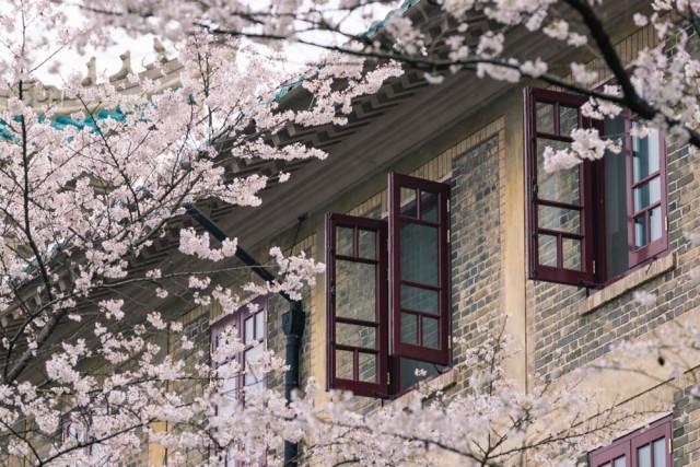 放一些樱花季的武汉大学的美景,我觉得樱花是想告诉大家:想开一点吧,结合今天抑郁症上吊的明星,我们总是匆匆生活,却忘记停下脚步欣赏自然的美景,祝大家天天愉快[心]